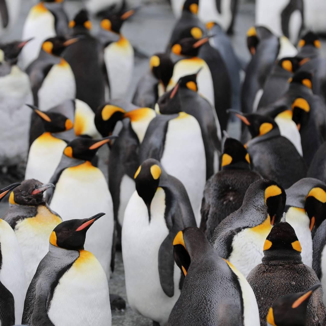 Custom-Travel-Planner-Network-2-SM-Antarctica-Penguins-
