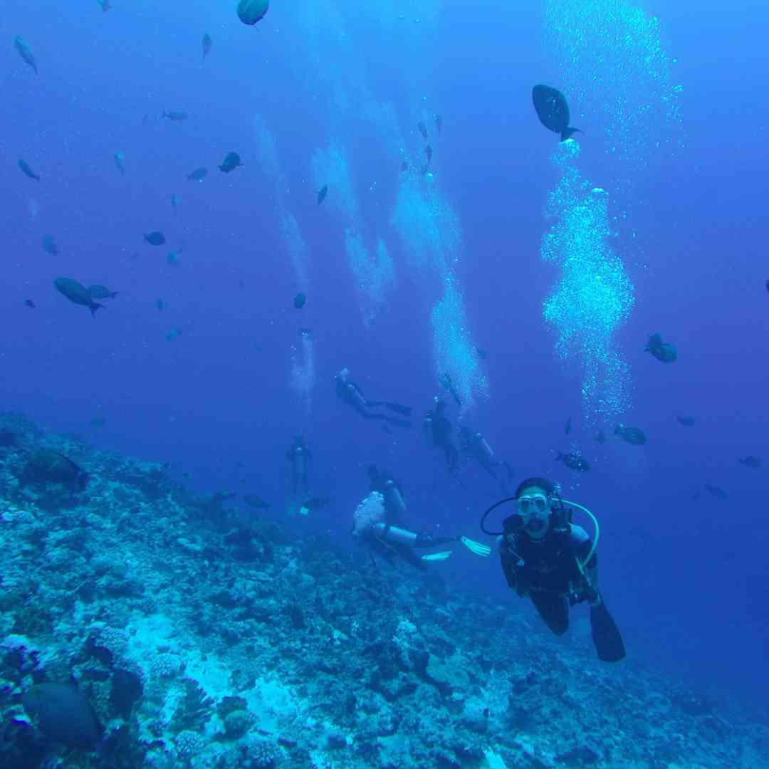 Custom-Travel-Planner-Network-2-SM-Tahiti-Rangiroa-Diving