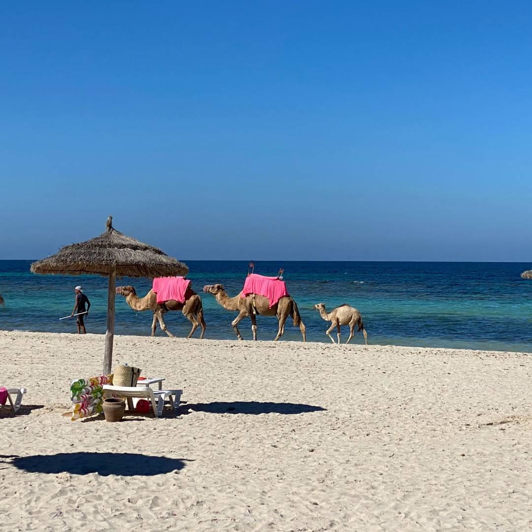 Custom-Travel-Planner-Network-2-SM-Tunisia-Jerba-Beach