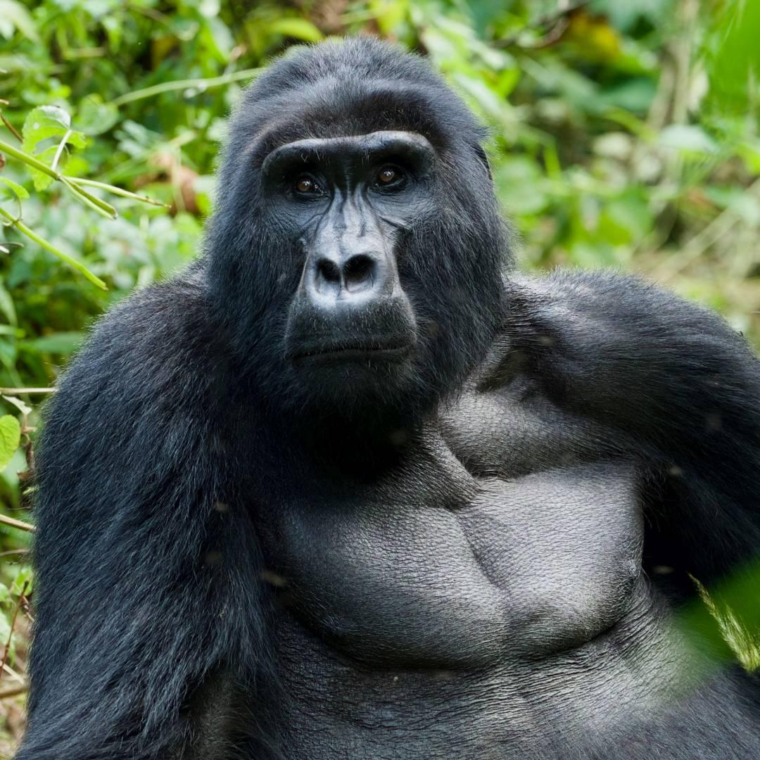 Custom-Travel-Planner-Network-2-SM-Uganda-Bwindi-Gorilla