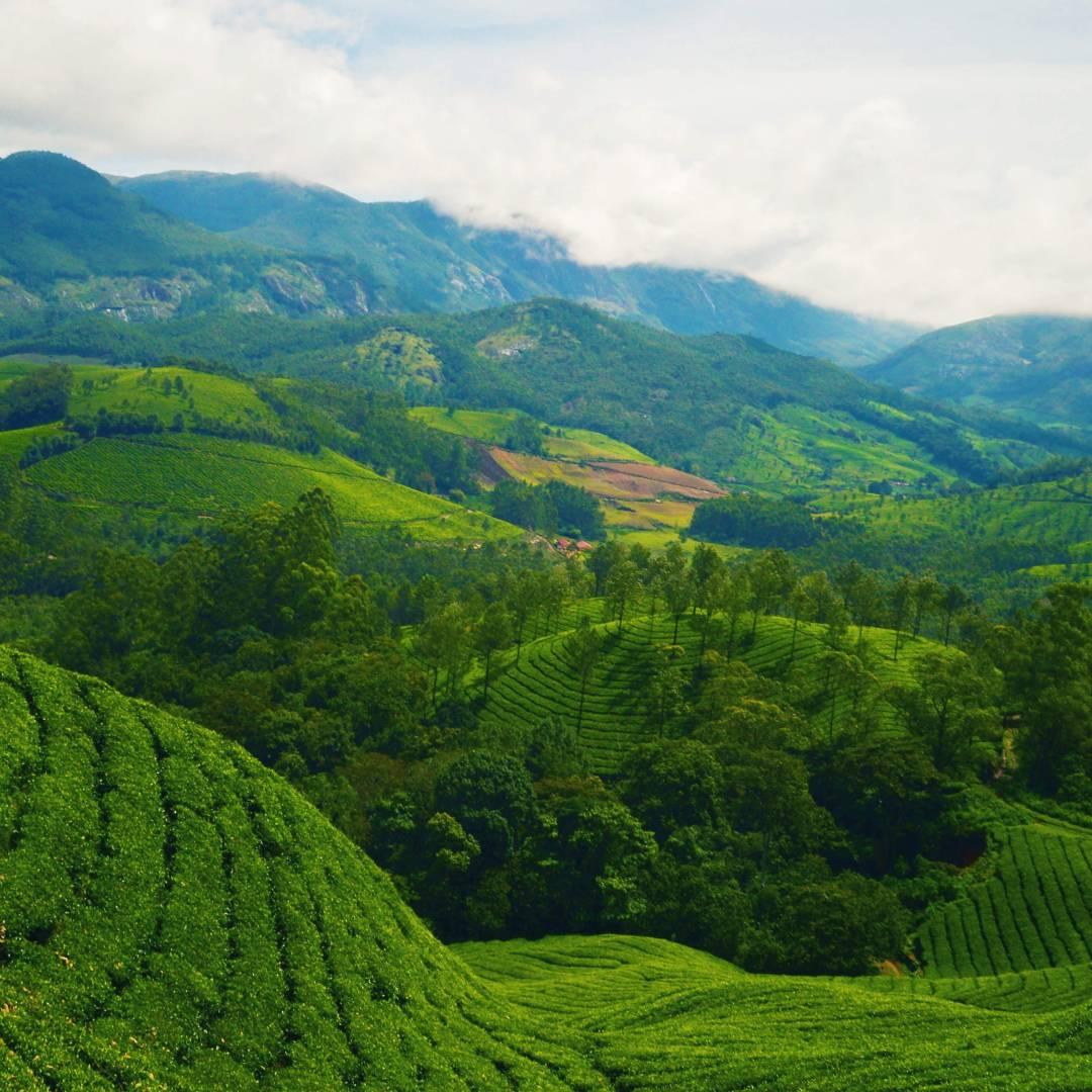 Custom-Travel-Planner-Network-3-India-Kerala-Tea-Farms