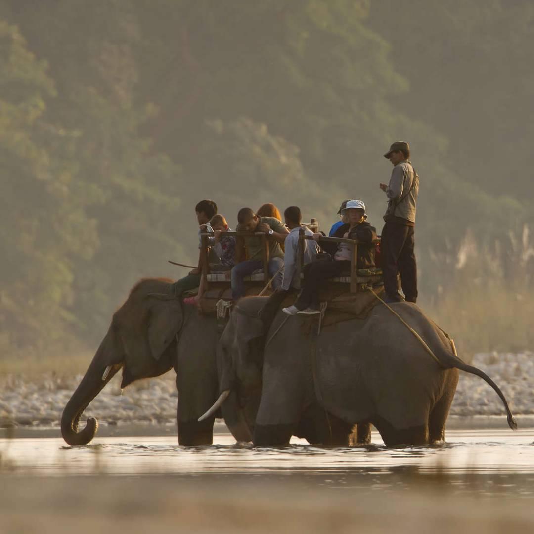 Custom-Travel-Planner-Network-3-Nepal-Bardia-National-Elephants