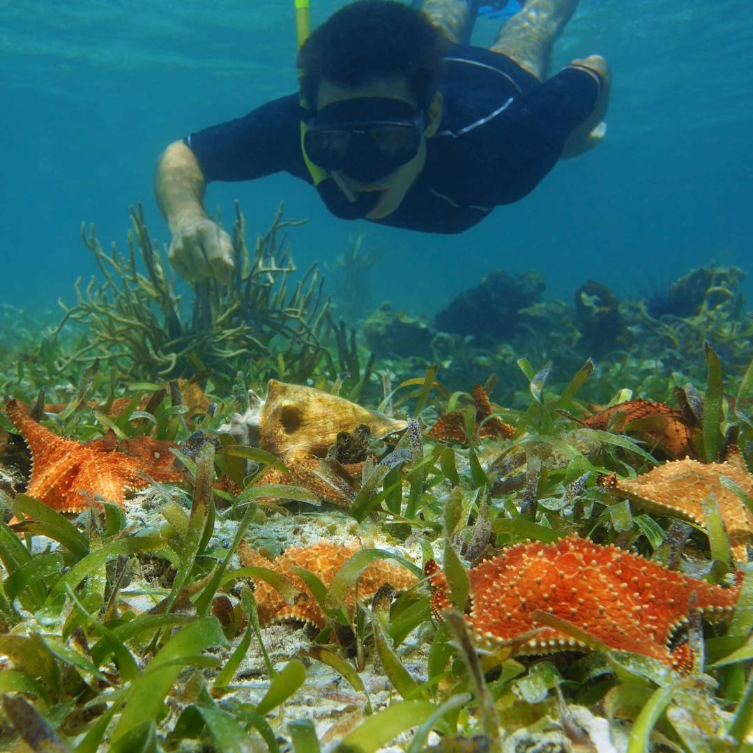 Custom-Travel-Planner-Network-4-Caribbean-Snorkeling