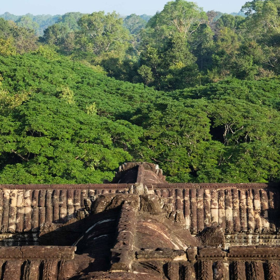 Custom-Travel-Planner-Network-4-SM-Cambodia-Old-Growth-Forest