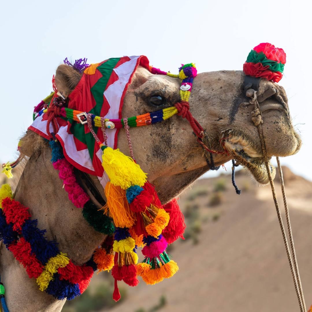 Custom-Travel-Planner-Network-5-India-Rajasthan-Camel-Ride-