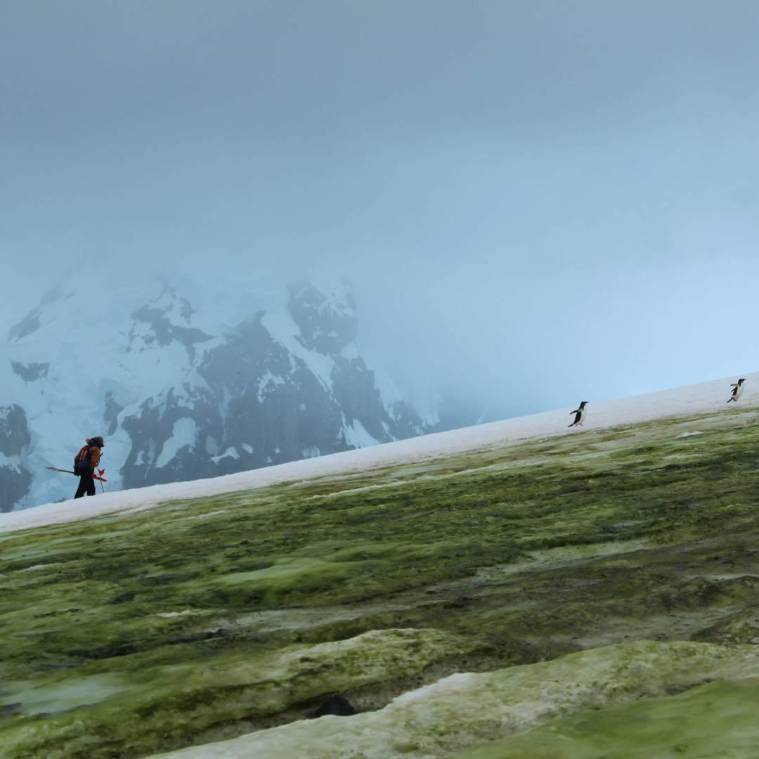 Custom-Travel-Planner-Network-5-SM-Antarctica-Hiker-with-penguins