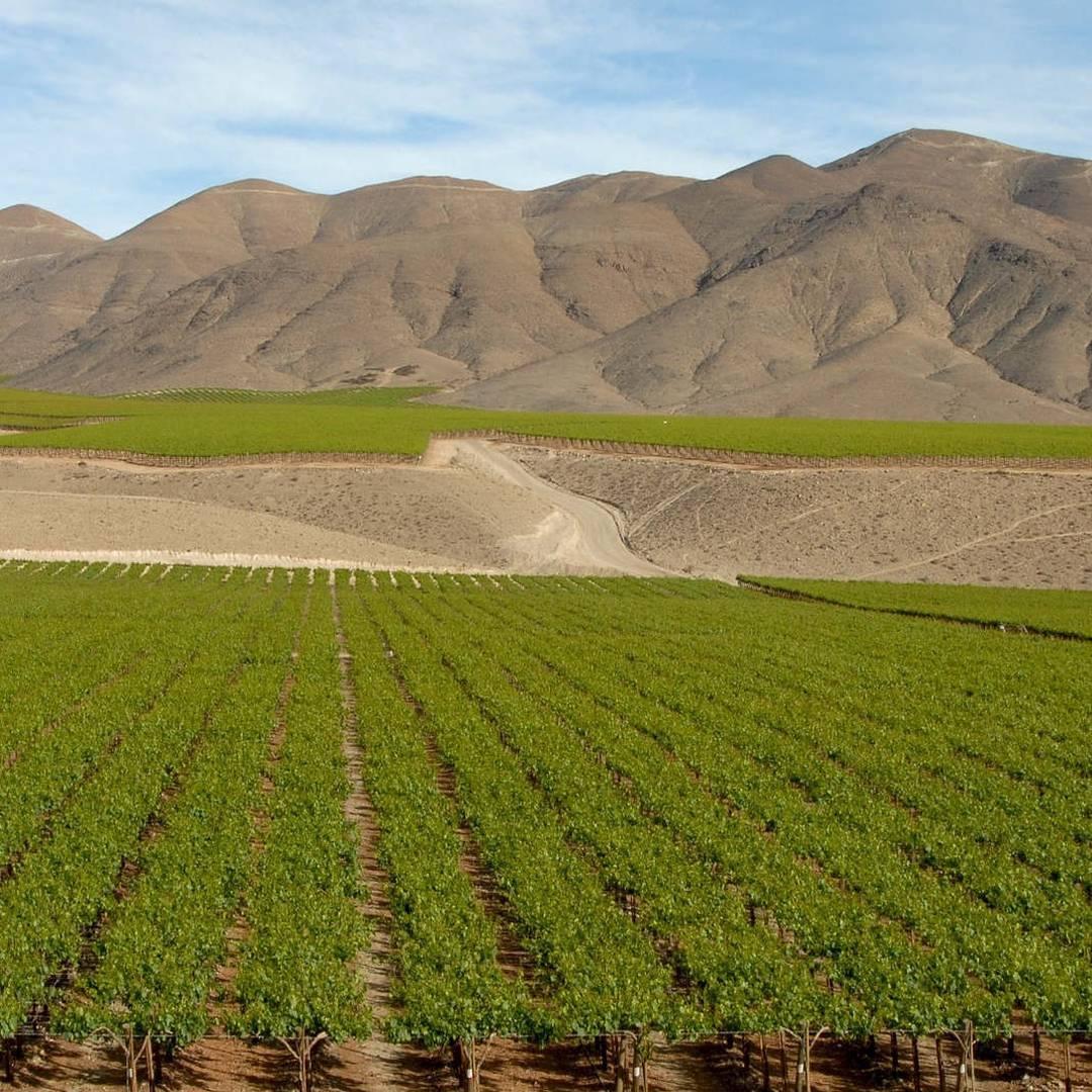 Custom-Travel-Planner-Network-6-SM-Chile-Vineyards