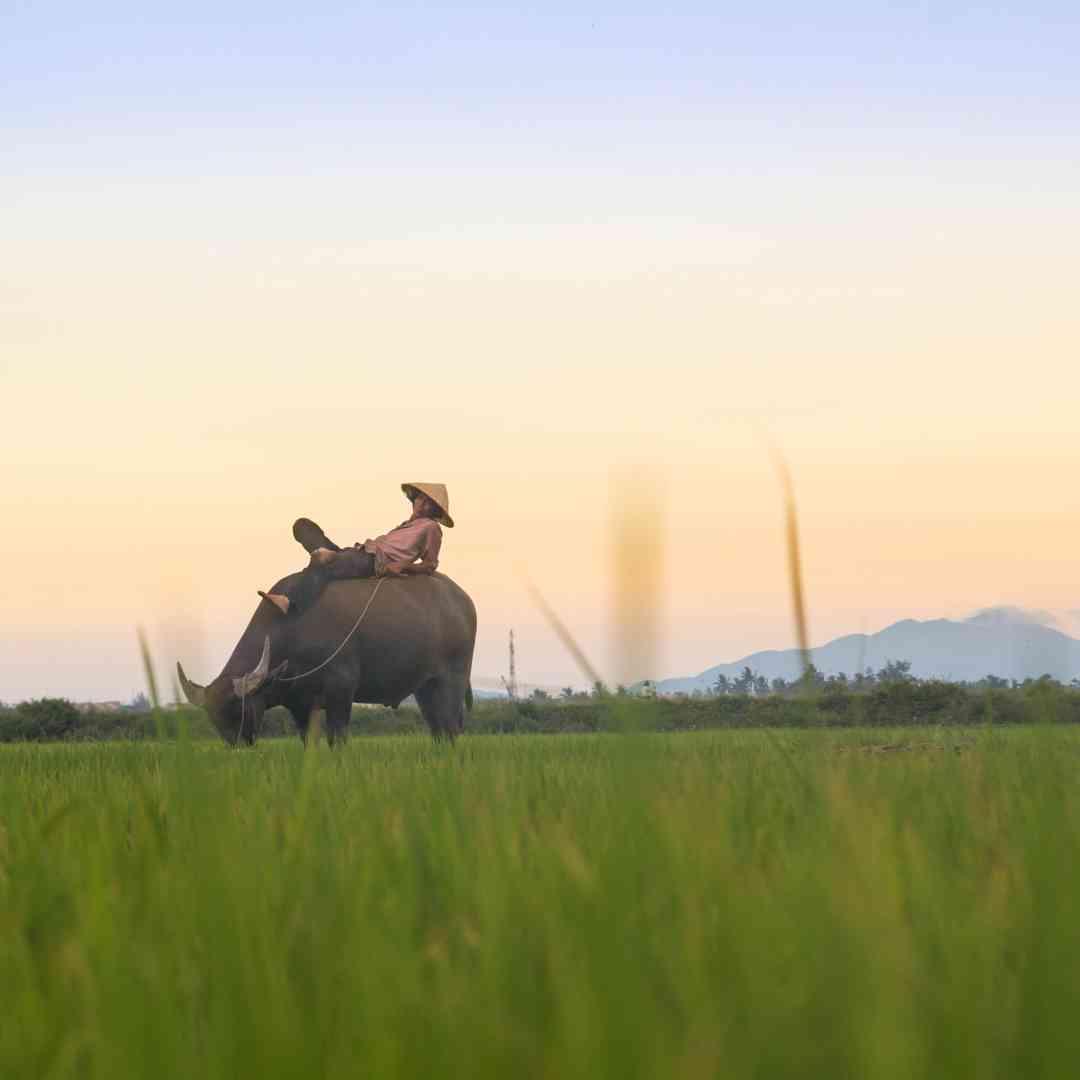 Custom-Travel-Planner-Network-6-SM-Vietnam-Hoi-An