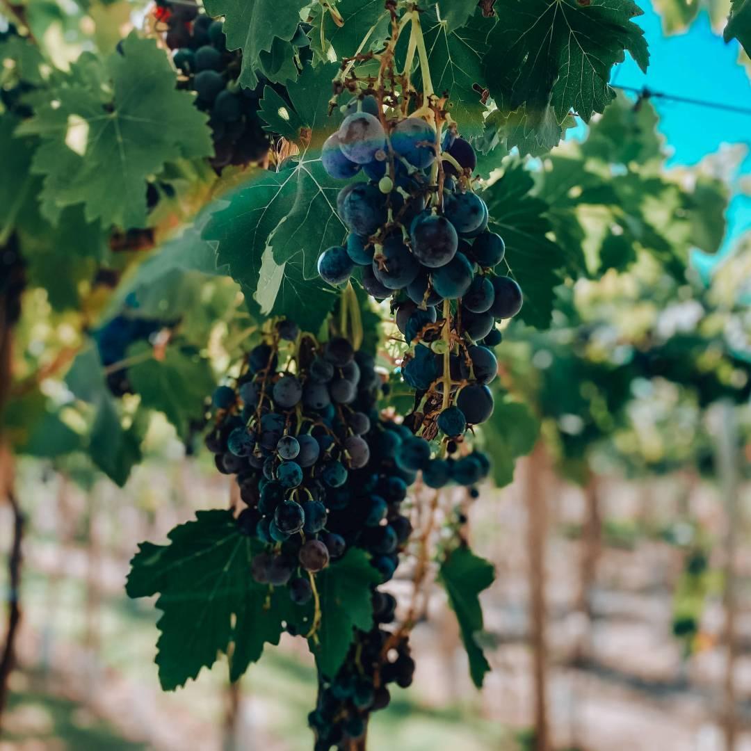Custom-Travel-Planner-Network-7-Argentina-Mendoza-Winery