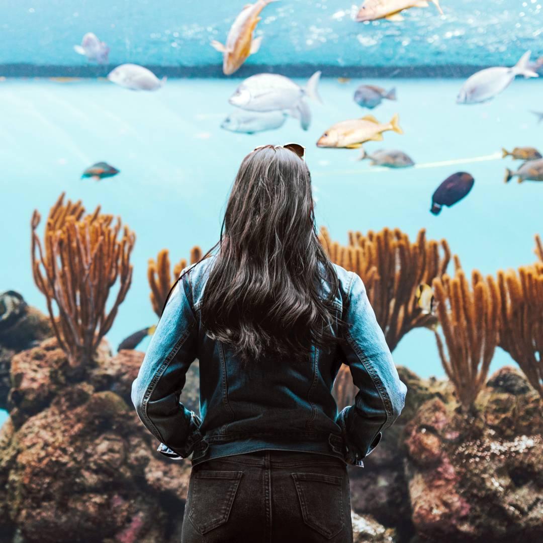 Custom-Travel-Planner-Network-7-SM-Bermuda-Aquarium