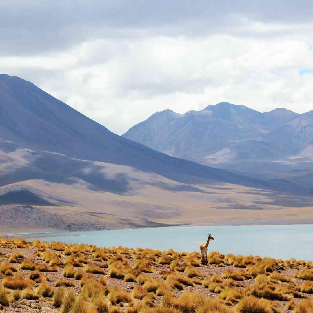 Custom-Travel-Planner-Network-7-SM-Chile-Los-Flamencos-National-Reserve