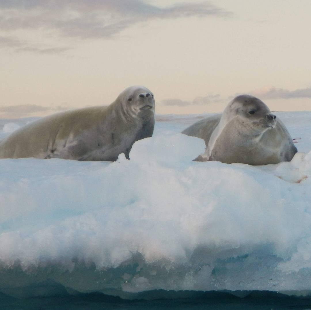 Custom-Travel-Planner-Network-9-SM-Antarctica-Sea-Seals
