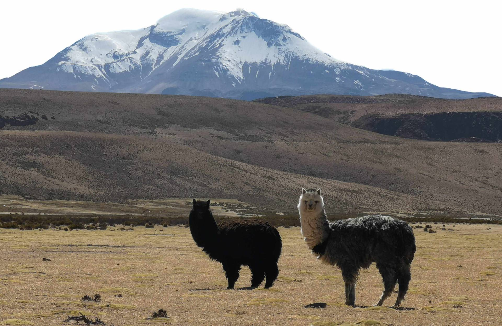 Custom-Travel-Planner-Network-Chile-Putre-
