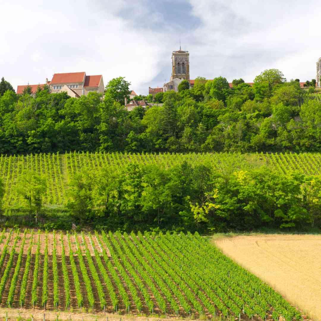 Custom-Travel-Planner-Network-3-France-Vineyards