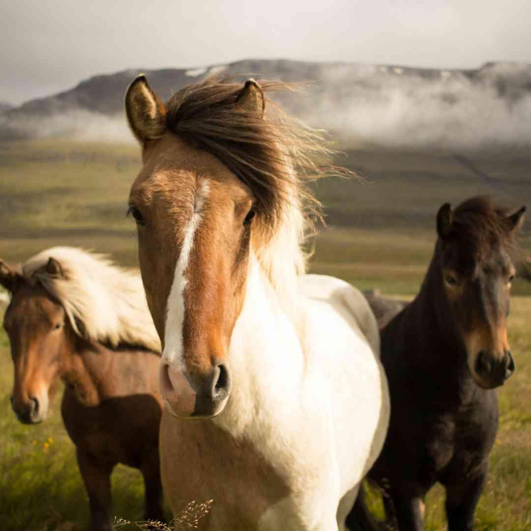 Custom-Travel-Planner-Network-8-SM-Iceland-Horses