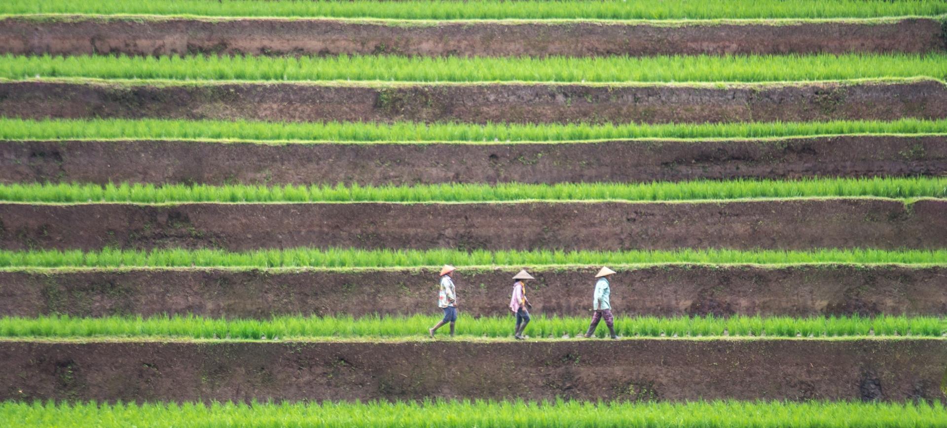 Custom-Travel-Planner-Network-Beautiful-Bali-Rice-Farmers